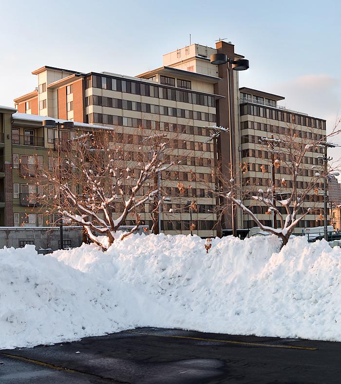 Snowtreebuilding