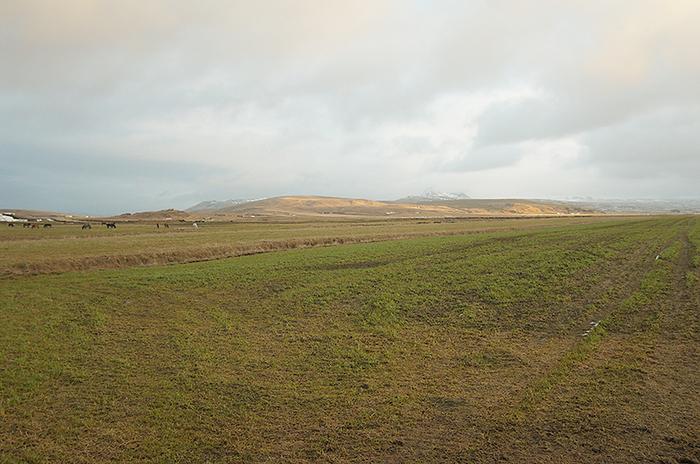 Icelandgrass