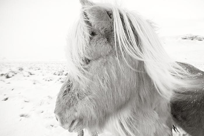 Ponybw